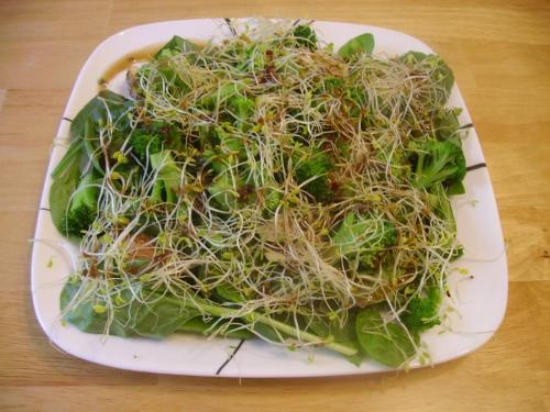 Sesame Sprout Green Salad